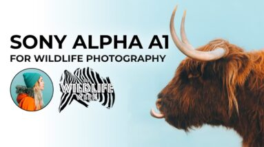 Charly Savely: Sony Alpha a1 for Wildlife Photography: Conversation and Q&A | #BHWildlifeWeek