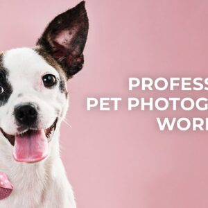 Professional Pet Photography Workflow | B&H Event Space