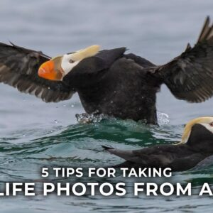 5 Tips for Wildlife Photography from a Boat with Lisa Langell