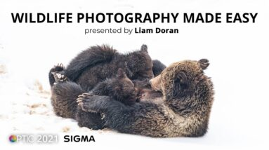 Majestic Mountain Mammals: Wildlife Photography Made Easy with Liam Doran | OPTIC 2021